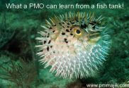 What a PMO can learn from a fish tank