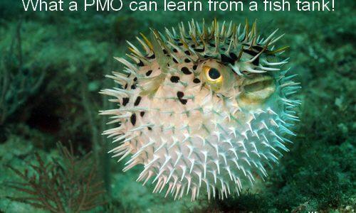 what can a marine fish tank teach the pmo pm majik